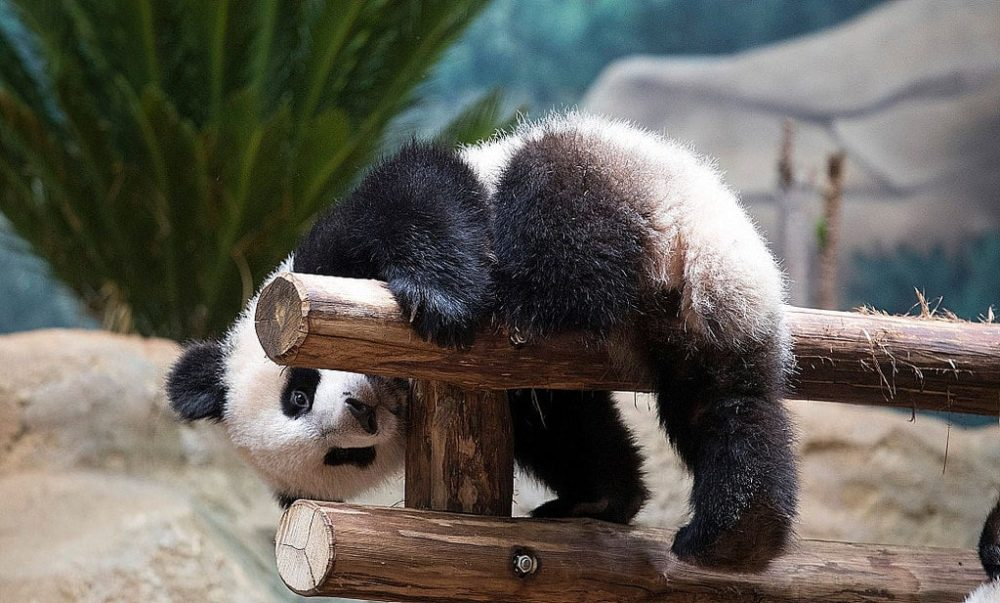 Comment bien préparer son séjour au zoo de Beauval ?